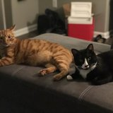 Photo for Sitter Needed For 2 Cats In Louisville