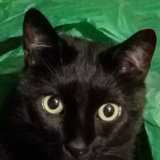 Photo for Looking For A Pet Sitter For 1 Cat In Tracy