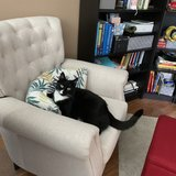 Photo for Looking For A Pet Sitter For 1 Cat In Harrisburg
