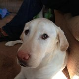Photo for Sitter Needed For 1 Dog In Pittsford