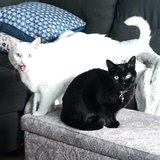 Photo for Looking For A Pet Sitter For 2 Cats In Franklin