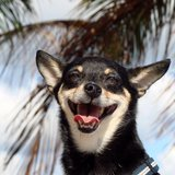 Photo for Occasional 24-72hr Sitter Needed For 1 Dog In Brickell Miami