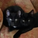 Photo for Looking For A Pet Sitter For 2 Cats In Lake Mary