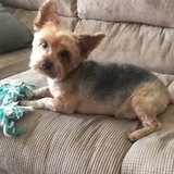 Photo for Sitter Needed For 1 Dog In Winston Salem