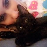 Photo for Cat Sitter Needed For Christmas Week!