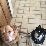 Photo for Looking For A Pet Sitter For 2 Dogs In Lakewood