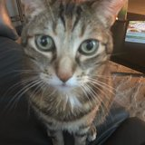 Photo for Sitter Needed For 1 Cat In Edmonds
