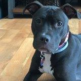 Photo for High Energetic Dog Walker Needed For 1 Dog In Kenosha
