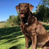 Photo for Walker Needed For 1 Dog In Monarch Beach