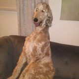 Photo for Looking For A Pet Sitter For 1 Dog In Aston