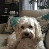 Photo for Walker Needed For 1 Dog In Wayne