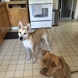 Photo for Looking For A Pet Sitter For 2 Dogs In Berkeley