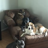 Photo for Looking For A Pet Sitter For 4 Dogs In Fort Wayne