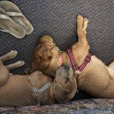 Photo for Seeking Overnight Pet Sitter For 2 Dogs Near Irvington