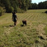 Photo for Seeking Occasional Farm Sitter