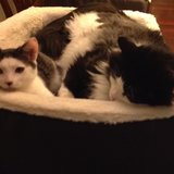Photo for Sitter Needed For 2 Cats In Bremerton