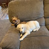 Photo for Looking For A Pet Sitter For 2 Dogs, 3 Cats In Mount Vernon