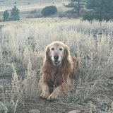 Photo for Walker Needed For 1 Dog In Castle Rock, Some Housekeeping, Some Errands