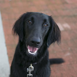 Photo for Walker Needed For 1 Dog In Menlo Park