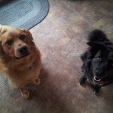Photo for Special Needs Pet Sitter Sitter