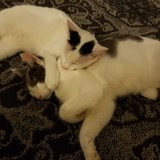 Photo for Sitter Needed For 4 Cats In Pearland