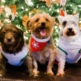 Photo for Walker Needed For 3 Dogs In Estero