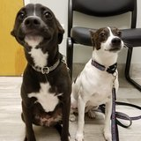 Photo for Sitter Needed For 2 Dogs In Parrish With Traveling Mom
