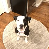 Photo for Walker Needed For 1 Dog In Chelsea