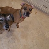 Photo for Loves Dogs With Lots Of Energy.  Sitter