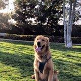 Photo for Dog Walk/play