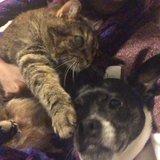 Photo for Dog Walker/sitter