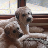 Photo for Mid Day Check In-Needed For 2 Dogs In Savage/Burnsville