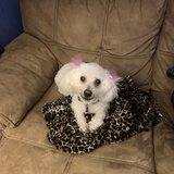Photo for Dog Sitter/Walker Needed For 1 Dog In Sebastian