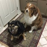 Photo for Pet Sitter/ Housekeeper Needed