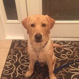Photo for Yellow Lab Lover Boarding