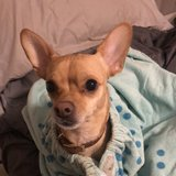 Photo for Looking For A Pet Sitter For 2 Dogs, 1 Cat In Providence