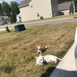 Photo for 2 Dogs In Clayton