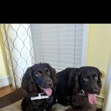 Photo for Looking For A Pet Sitter For 2 Dogs