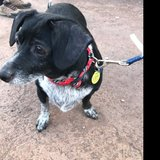 Photo for Gentle And Patient Walker Needed For Blind Dog