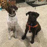 Photo for Walker Needed For 2 Dogs In Powell