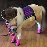 Photo for Therapy Miniature Horse Farm - Needs Help With Unpacking, Organizing, Running Errands, Etc