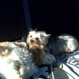 Photo for Special Needs Pet Sitter