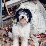 Photo for Sitter Needed For 1 Dog In Fremont
