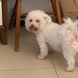 Photo for Looking For A Pet Sitter For 1 Dog In Deerfield Beach