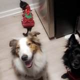 Photo for Looking For A Pet Sitter/Walker For 2 Dogs, 1 Cat In Centreville