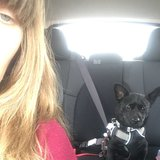 Photo for Pet Sitter Needed For 1 Small Dog In Kenosha - Market Square Apts