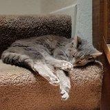 Photo for Sitter Needed For 1 Cat In El Segundo