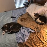 Photo for Cats Caregiver