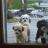 Photo for Looking For A Pet Sitter For 3 Dogs In Minneapolis