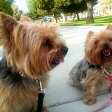Photo for Sitter Needed For 2 Dogs In San Diego